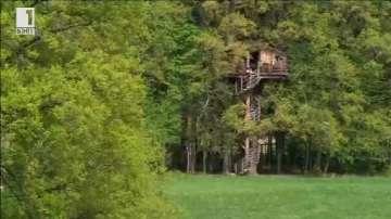Зелена светлина: Хотел в клоните на дърветата