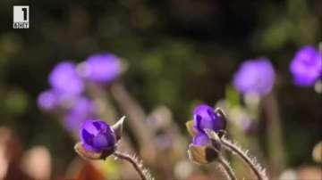 Зелена светлина: Тайният свят на растенията