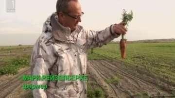 Зелена светлина: солени зеленчуци