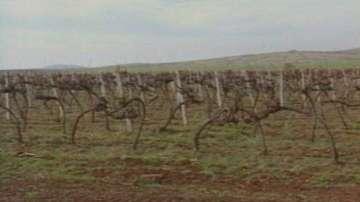 БСП се обявиха против продажбата на земеделска земя на чужденци