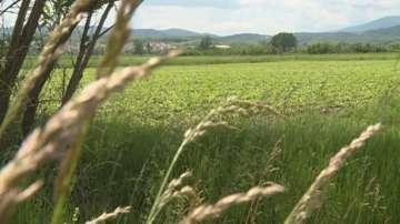 Неясноти в Наредбата за деклариране на земеделски земи предизвикаха негодувание