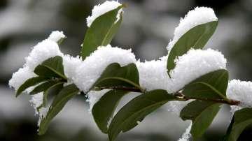 В капана на зимата: Ситуацията в Северна България е овладяна