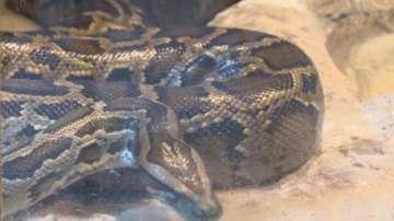 Най-опасните змии у нас и как да се пазим