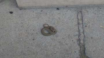 Змия ухапа дете в центъра на Пловдив