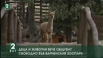Деца и животни вече общуват свободно във Варненския зоопарк