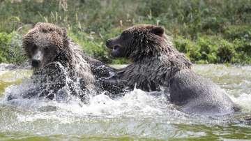 Жегата във Великобритания мъчи обитателите на зоопарка в Лондон