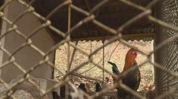 Роми крадат пернати от зоопарка в Благоевград
