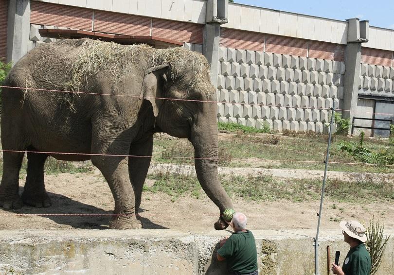 В Зоологическата градина в София днес се проведе демонстрационно хранене