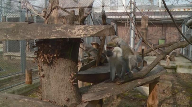Снимка: Размразиха проекта за зоопарка на Пловдив