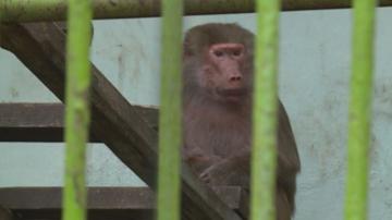 Ремонтират част от клетките в зоопарка в Благоевград