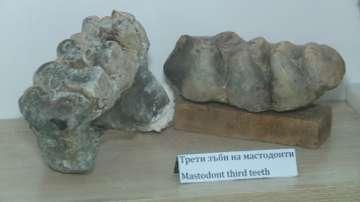 Палеонтологичният музей в Чирпан показва ценни експонати
