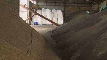 Измама със зърно чрез манипулиран кантар в кооперация